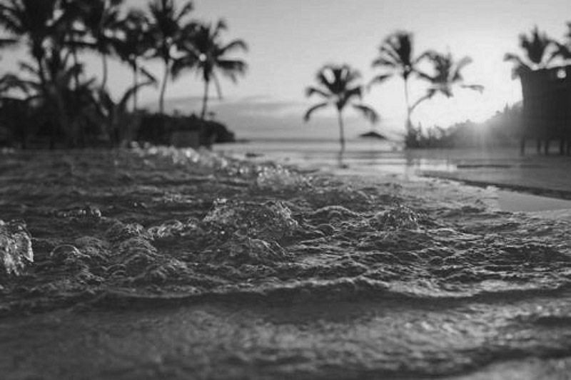 black-and-white-beach-pictures-palm-treescolor-blinded---black-and-white-beach-blog-ton7ifgk